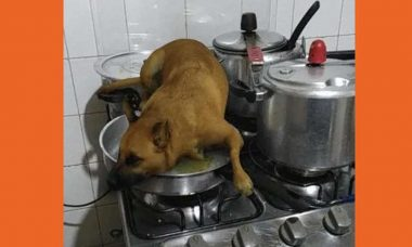 Brazuca Dog: Filtro do Instagram que permite inserir cachorro vira mania