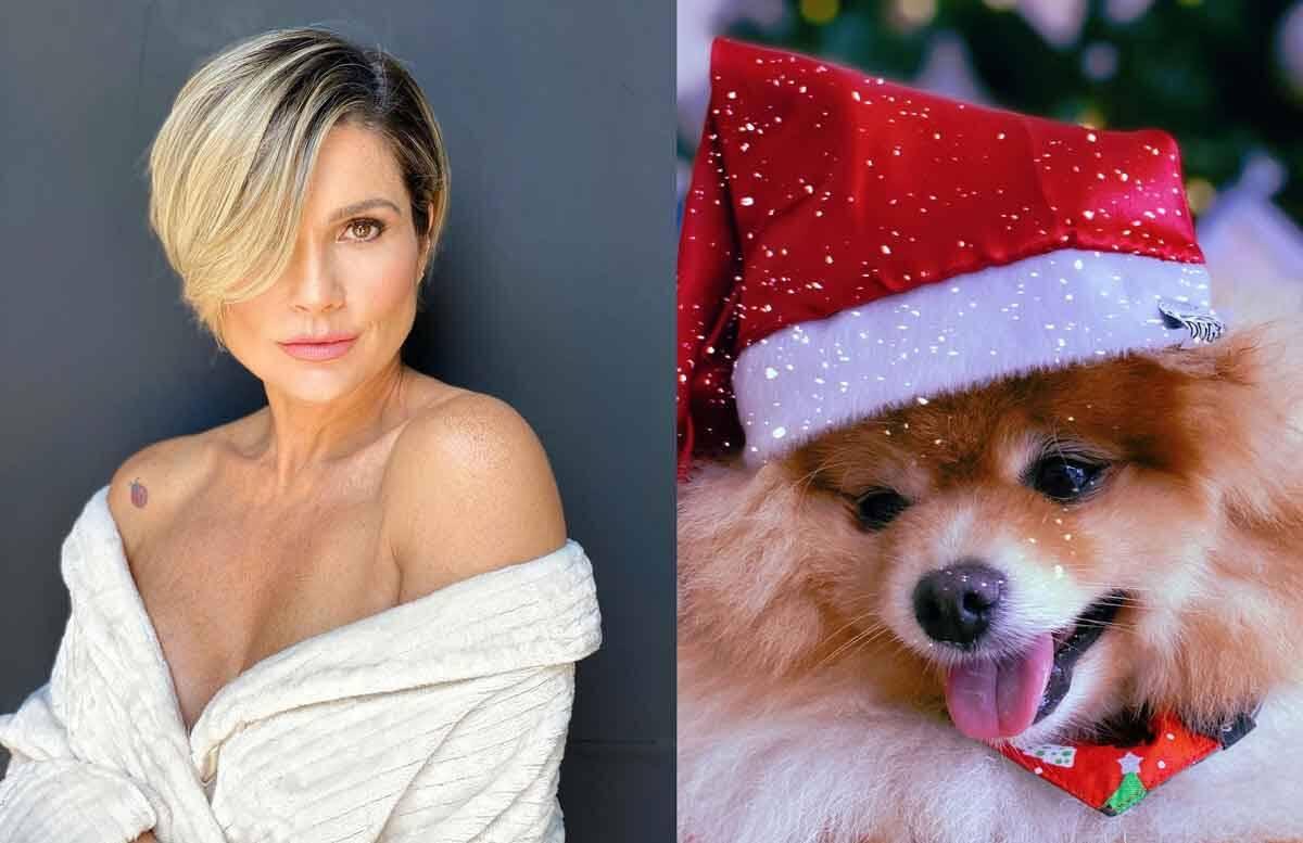 Flávia Alessandra encanta com foto de cachorrinhos com trajes natalinos . Foto: Reprodução Instagram