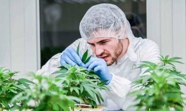 Conheça a Cannerald: empresa que faz sucesso nas redes sociais com pesquisas da cannabis medicinal. Foto: Divulgação