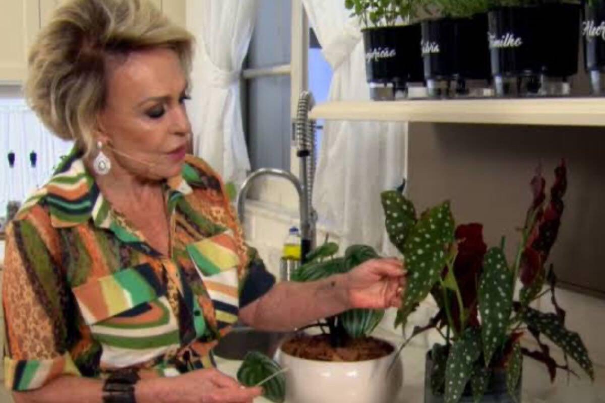 """Ana Maria Braga posa com plantas e web brinca: """"Entrevistando a Thais"""""""