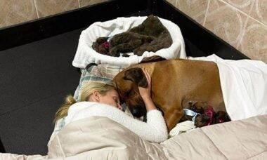 Ana Hickmann passa a noite ao lado de cachorra que pariu 17 filhotes: 'criar por amor'