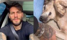 Lucas Lucco adota cachorro de rua e brinca com esposa: 'não me mata'