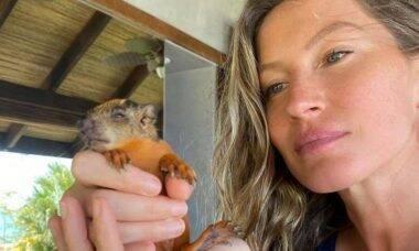 Gisele Bündchen resgata filhote de esquilo: 'rezando que ele fique bem'